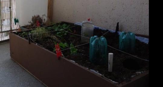 [Fiche potager de balcon] Comment cultiver sur mon balcon ?